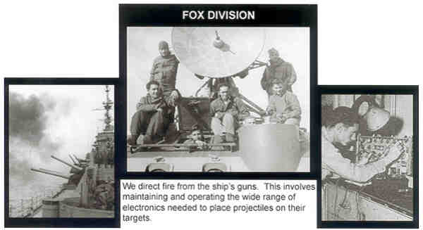 A-11-DivFox